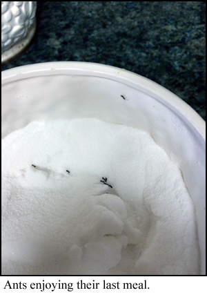 ants1